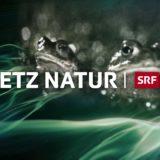 HII – Netz Natur goes Herre II